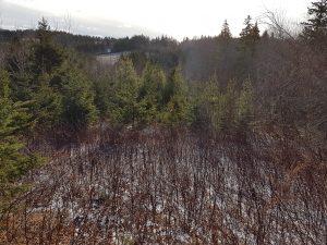 Millvale trail